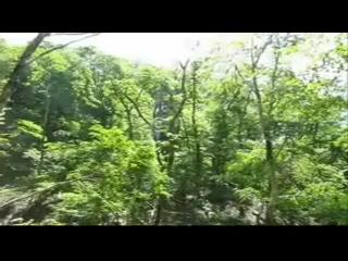 原生林トレッキング。