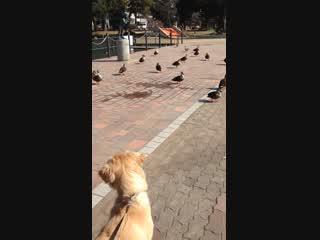 公園の水鳥とニコ