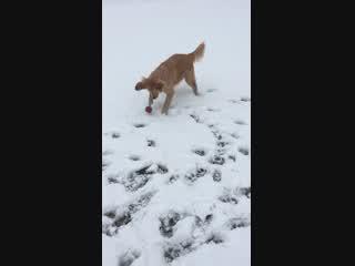 初雪の大興奮