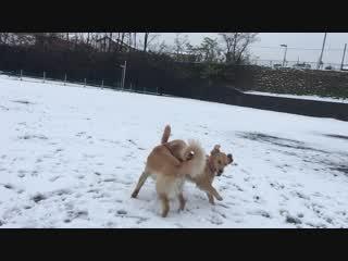 初雪の大興奮②