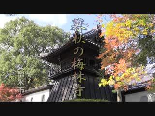 暮秋の梅林寺