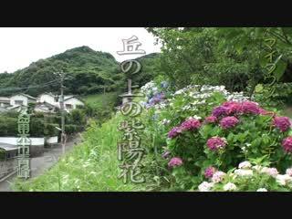 丘の上の紫陽花