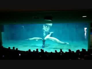 しまね海洋館 シロイルカの幸せバブルリング