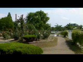 開成山公園のバラ