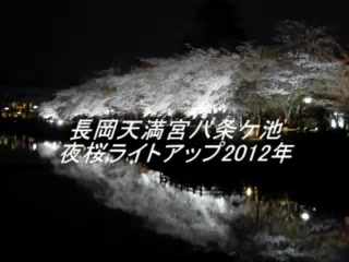 長岡天満宮八条ケ池の夜桜ライトアップ