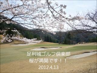 足利城ゴルフ倶楽部の満開の桜2012