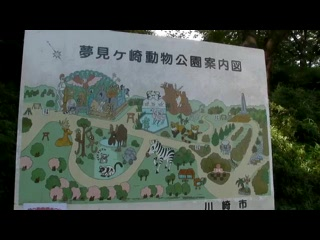 【動物動画】コモンマーモセット common marmoset