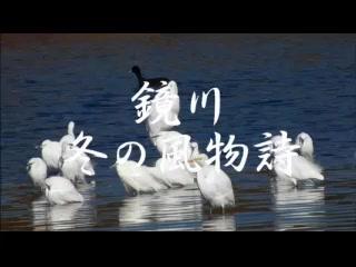 鏡川冬の風物詩
