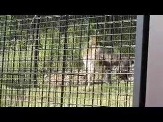 東山動植物園 新オオカミ舎前