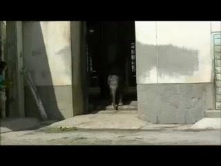 東山動物園 『アジアゾウの親子』 その1