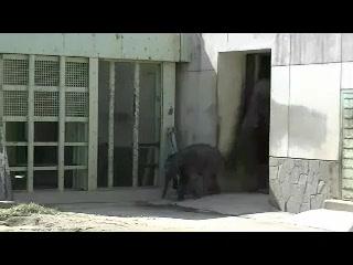 東山動物園 『アジアゾウの親子』 その2