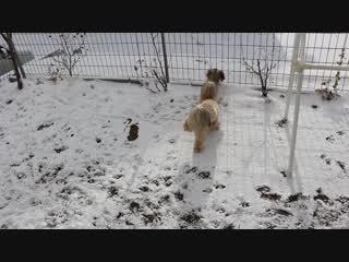 雪玉が気になる?