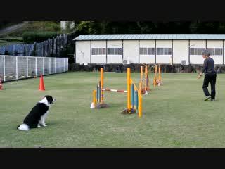 ドッグアジリティ ジャンピング3度の練習