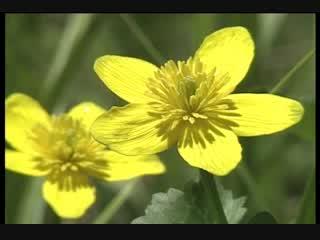 八木伸浩 野に咲く黄色い花に魅かれて