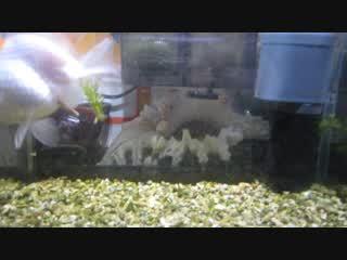 金魚の映像 1