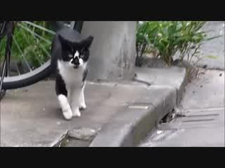 近所の猫  UTAU デフォルト オリジナル曲 誰も止められない
